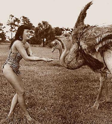 bp_ostrich